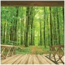 Foto tapetas Woodland Forest